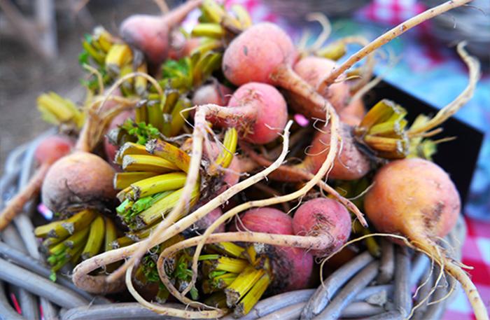 Farmers Market Radish